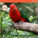 حديقة الحيوانات الوطنية- استمرار أعمال الصيانة وتطوير