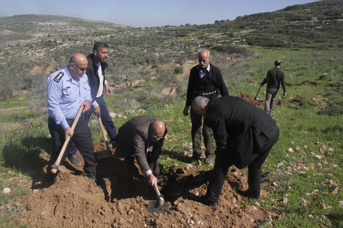 عضو المجلس البلدي يشارك في فعالية زراعة أشجار الزيتون