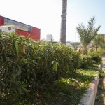 اعمال تعشيب وتقليم اشجار – شارع عثمان غشاش (22)