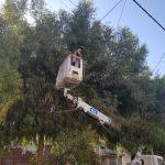 حملة لتقليم الاشجار الملامسة لشبكات واسلاك الكهرباء.