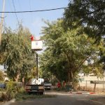 تقليم اشجار في شارع جلجولية.