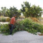 من اعمال قسم الزراعة في بلدية قلقيلية