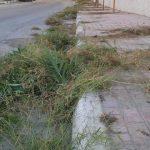 استمرار حملة تنظيف وتعشيب الأرصفة وجوانب الطرقات
