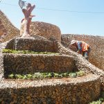 قسم الزراعة – زراعة ورود موسمية