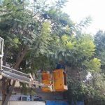 مواصلة اعمال تقليم الاشجار  لاستقبال فصل الشتاء